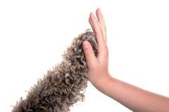 Hohe fünf Hund und Mädchen Lizenzfreie Stockbilder