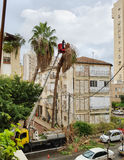 Hohe gefährliche Palme des Abbaus von einem Eimer-LKW Stockbild