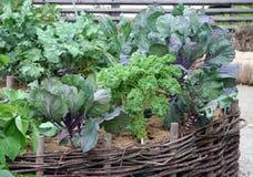 Hohe Gemüsegartenbetten Stockbilder