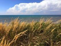 Hohe Gräser, die lakeshore entlang durchbrennen Lizenzfreie Stockfotografie