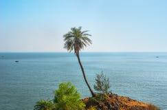 Hohe grüne einsame Palme auf dem Berg gegen das Meer im exotischen Stockbild