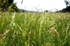 Hohe grünes Gras-Landschaft Lizenzfreies Stockbild
