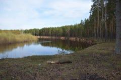 Hohe Küste des Frühlinges des Waldflusses stockfoto