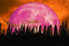 hohe Kiefer des super rosa Mondrückseiten-Schattenbildes im dunkelroten orange nig Stockbild