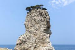 Hohe Klippen mit Bäumen an der Spitze von Meer lizenzfreie stockfotografie