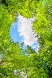 Hohe Kronen von Bäumen und von blauem Himmel Stockfotos
