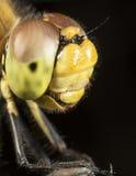 Hohe lineare Wiedergabe der Libelle Lizenzfreies Stockfoto