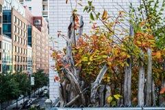 Hohe Linie Autumn Color Stockfotos