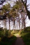 Hohe Nadelbäume entlang Küstenhügeln Lizenzfreie Stockfotos