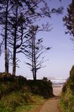 Hohe Nadelbäume entlang Küstenhügeln Lizenzfreies Stockfoto