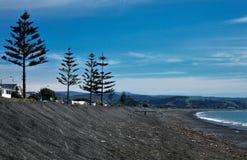 Hohe natürliche Weihnachtsbäume entlang einem schwarzen sandigen Strand lizenzfreies stockfoto
