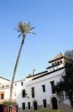 Hohe Palme in einem spanischen Marktplatz Lizenzfreies Stockfoto