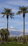 Hohe Palmen auf einem Golfplatz Stockfotografie