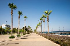 Hohe Palmen entlang Promenade in Limassol-Stadt, Zypern Stockfotografie