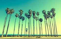 Hohe Palmen Kaliforniens auf dem Strand, Hintergrund des blauen Himmels Stockbilder