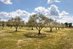 Hohe Provence, Frankreich Lizenzfreie Stockfotos