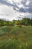 Hohe Provence, Frankreich Stockfoto
