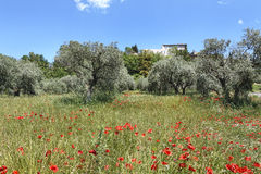 Hohe Provence, Frankreich Stockfotografie