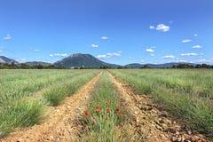Hohe Provence, Frankreich Lizenzfreies Stockfoto