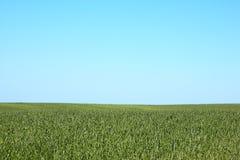 Hohe Rasenfläche und blauer Himmel Lizenzfreie Stockbilder