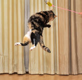 Hohe springende Katze Lizenzfreie Stockfotos