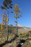 Hohe Tatra Berge stockfotos