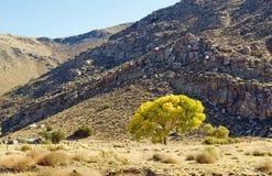 Hohe Wüsten-Weide stockbilder