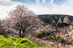 Hohe Winkelsicht von Goynuk-Stadt mit Frühling blüht geblasenen Baum Stockfoto