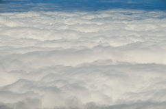 Hohe Wolken über Kiefern-Kegel-Baum-Wald Lizenzfreies Stockbild