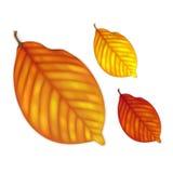 In hohem Grade ausführlicher Herbstlaub stock abbildung