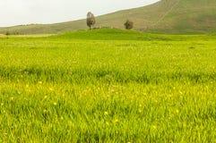 In hohem Grade ausführliches grünes Feld mit blühenden Blumen Stockfotos