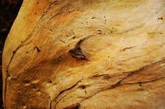 In hohem Grade strukturierter alter Baum-Stamm stockfoto