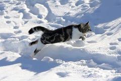 In hohen Sprüngen durch hol Schnee Stock Foto