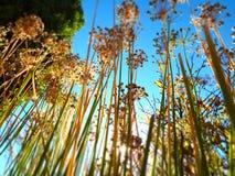 hohen Trockenblumen und Graslandgras oben betrachten stockfotos
