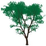 Hoher Auflösungbaum getrennt Lizenzfreies Stockbild