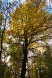 Hoher Baum in den schönen Farben Lizenzfreies Stockbild