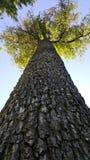 Hoher Baum, der die Sonne blockiert Stockbild
