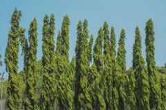 Hoher Baum, der gegen blauen Himmel steht Lizenzfreies Stockfoto