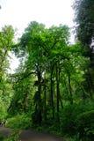 Hoher Baum in Washington State Stockbild