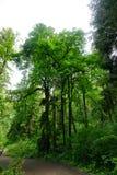 Hoher Baum in Washington State Stockfotos