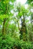 Hoher Baum in Washington State Lizenzfreie Stockfotografie