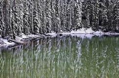 Hoher Baum-Winter-Muster-Reflexionen im grünen Wasser Stockfotografie