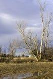 Hoher bloßer Baum auf dem Ackerland, das im Frühjahr Tauwetter, bewölkten Himmel überschwemmt Stockbild