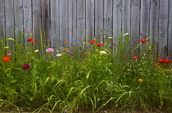 Hoher Blumengarten vor hölzernem Zaun Lizenzfreies Stockfoto