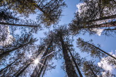 Hoher Gebirgsbäume und -himmel Stockfotografie