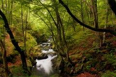 Hoher Gebirgsfluß im Wald lizenzfreie stockbilder