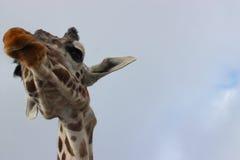 Hoher Giraffestutzen Lizenzfreie Stockbilder