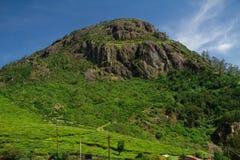 Hoher grüner Berg Lizenzfreies Stockfoto