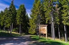 Hoher Kieferwald an einem sonnigen Herbsttag am Berg Bobija Stockfoto