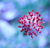 Hoher Winkel der Blume Stockbild